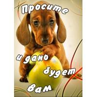 Магнит животные: Просите и дано будет вам(щенок с яблоком)